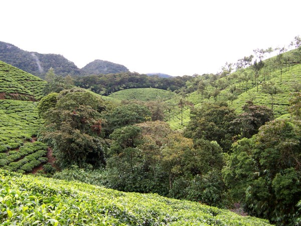 Biotee-Teegarten